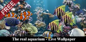 The real aquarium – Live Wallpaper